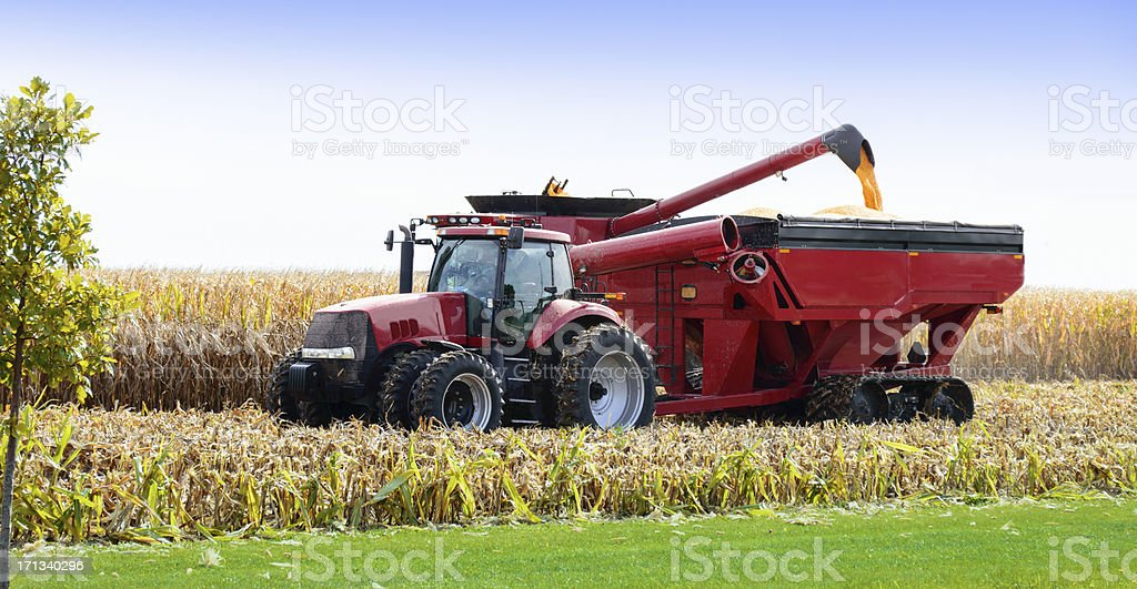 Combine harvesting corn royalty-free stock photo