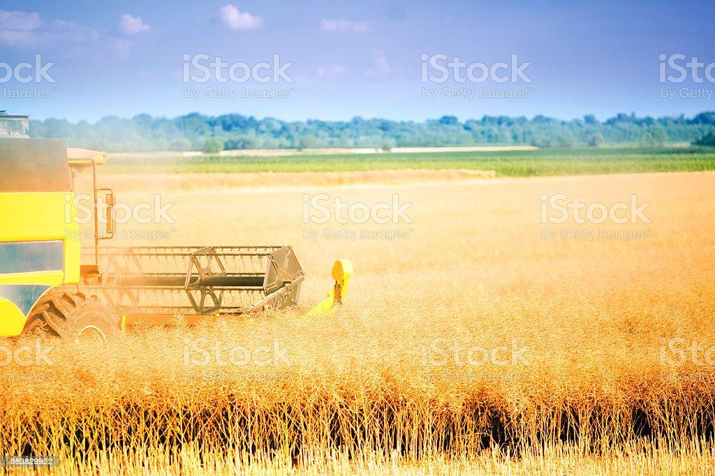 Combine harvesting crop stock photo