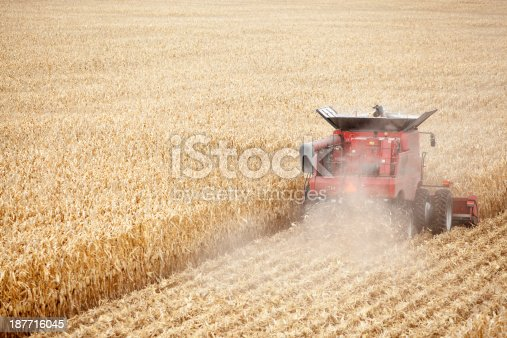 An aerial view of a combine harvesting a fall cornfield.