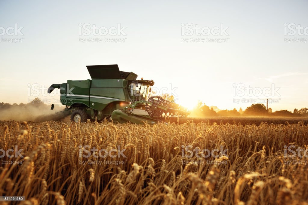 Combine harvesting on a wheat field stock photo