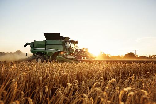 Combine Harvesting On A Wheat Field - zdjęcia stockowe i więcej obrazów Bez ludzi