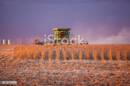 Combine harvesting beans in the evening light. Focus is on the soybean plants, not the combine.