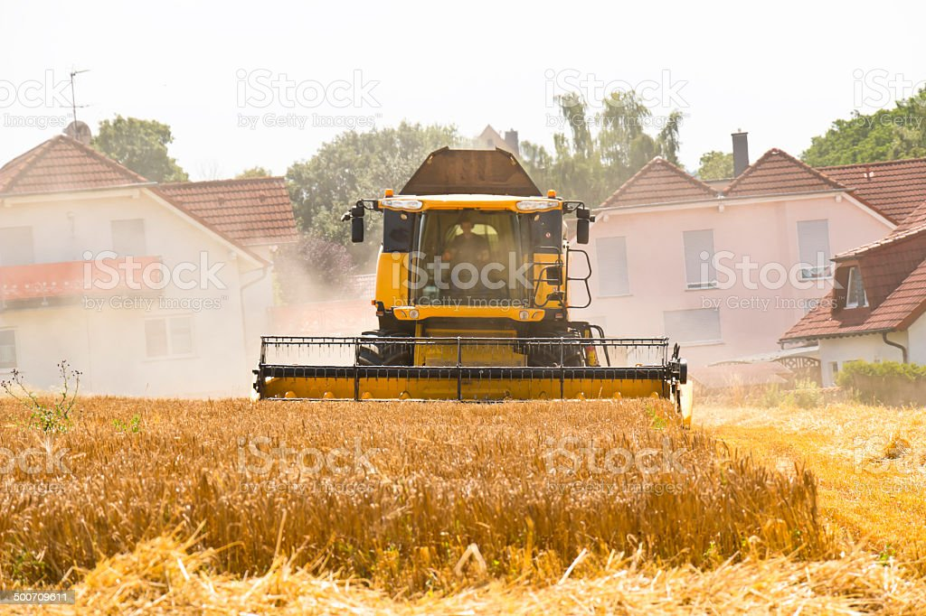 Combine harvesting wheat in residential area royalty-free stock photo