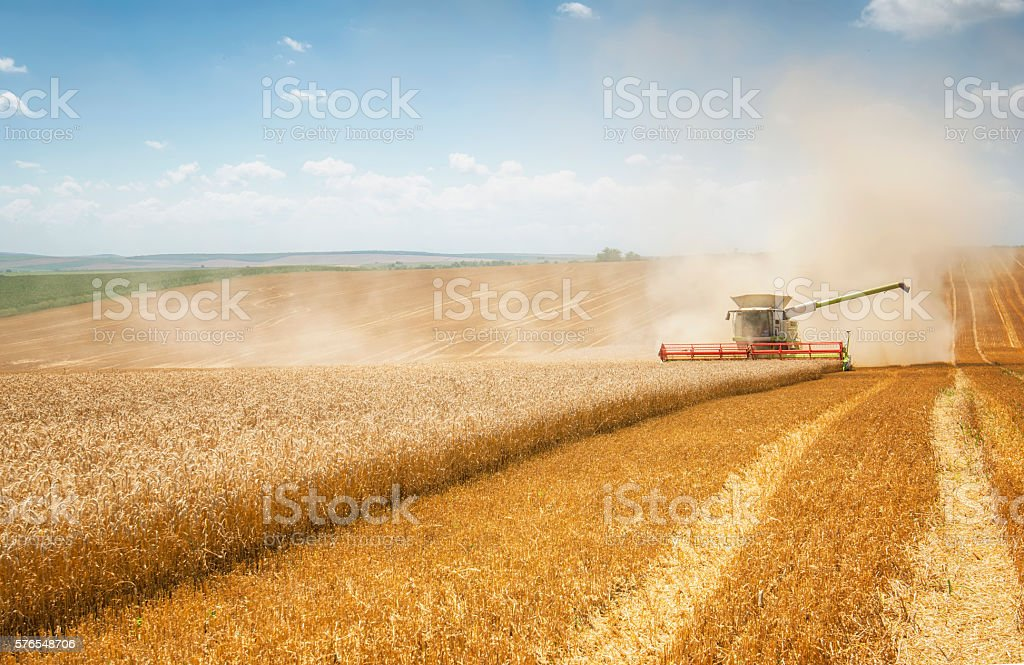 Combine harvesting wheat stock photo