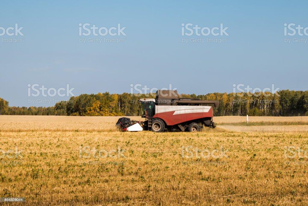 Combine harvests grain crops stock photo