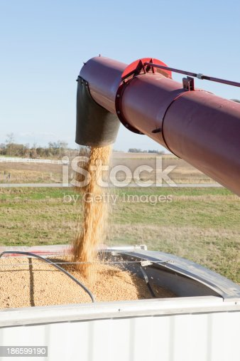 Freshly harvested soybeans are being offloaded from a combine, falling from an auger, into a grain truck. Shot from the combine with rural fall farmland and a road in the background.
