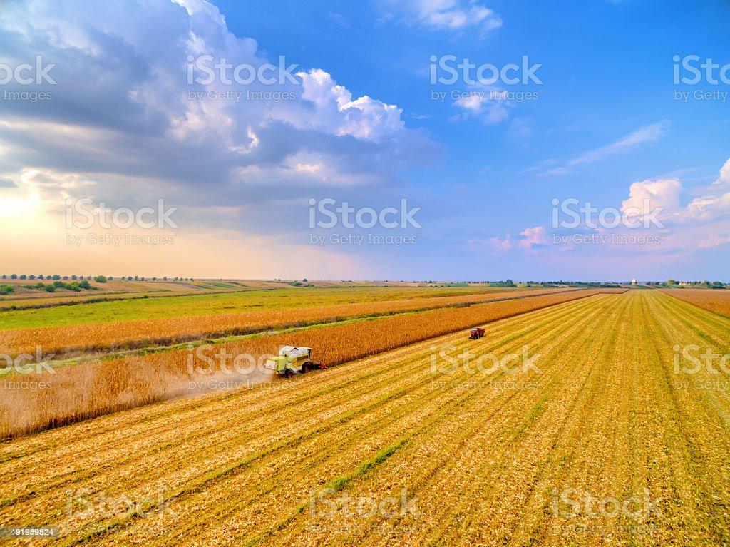Combine working on the corn field stock photo