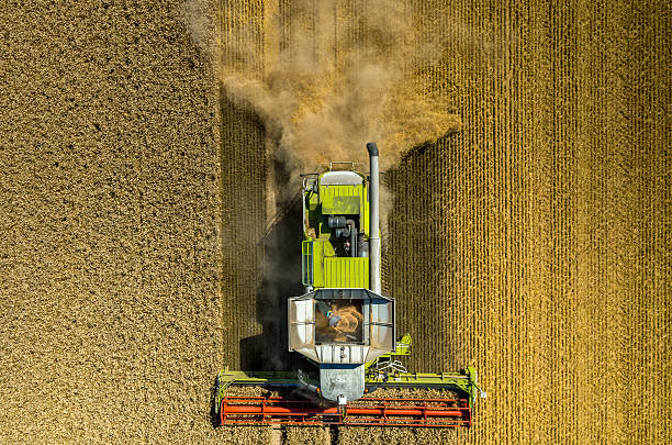 Combine working on the wheat field stock photo