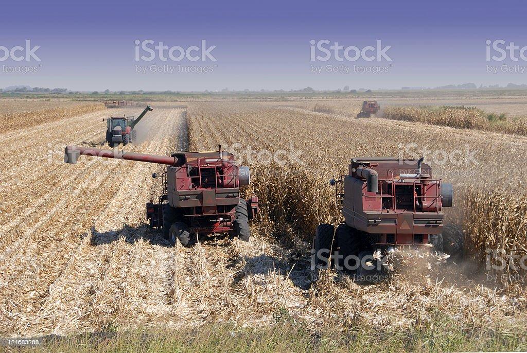 Combines Harvesting Corn stock photo