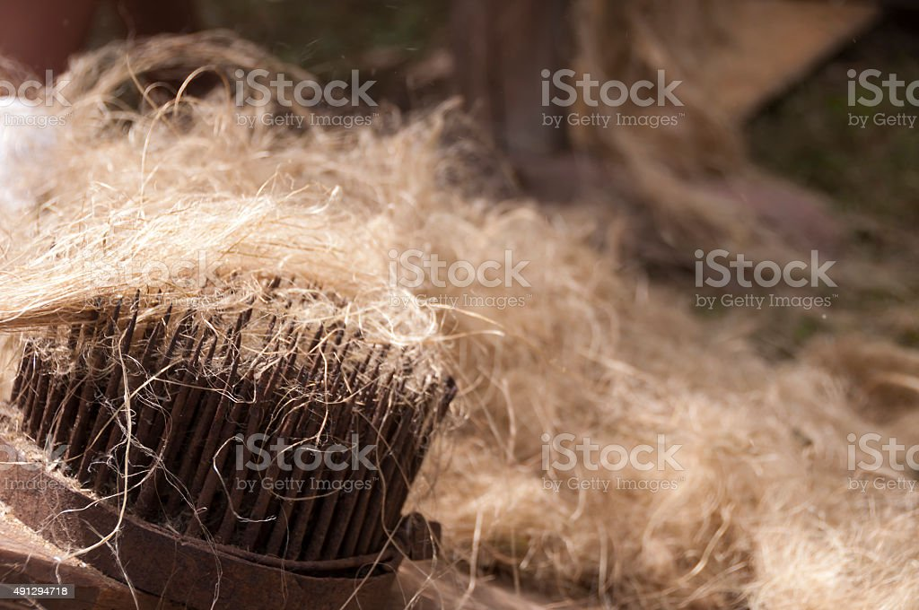 Combing the flax and hemp stock photo