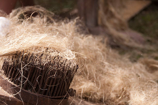 Combing the flax and hemp Tool for combing the flax and hemp mahroch stock pictures, royalty-free photos & images