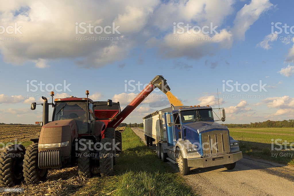Combining Corn stock photo