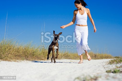 Boxer dog running after owners hand!