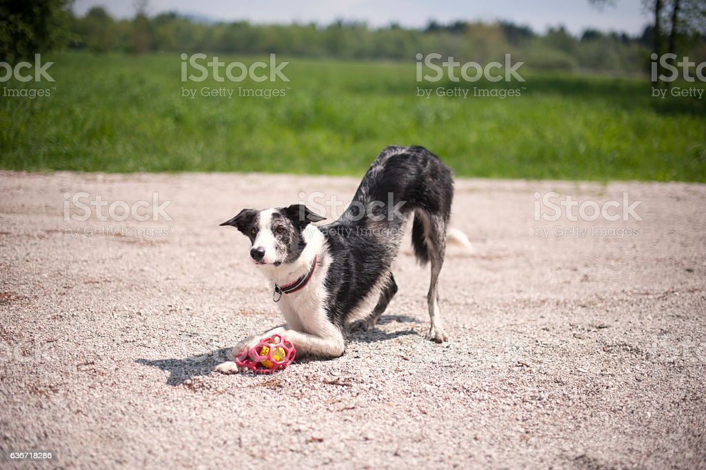 Come, play with me! stock photo