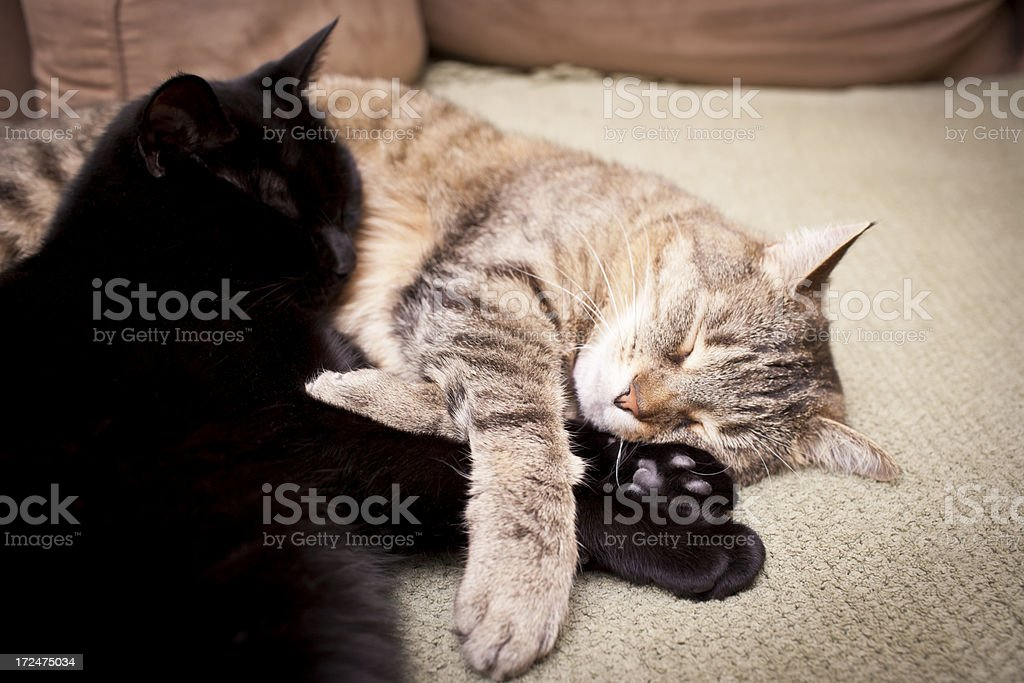 comfortable cats royalty-free stock photo