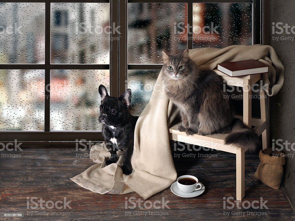 Comfortable room with panoramic window. Dog and cat sitting at the...