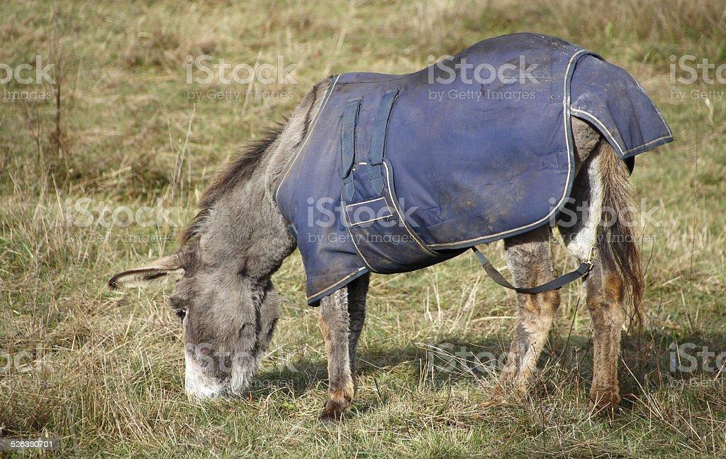 Coperta per animali da fattoria - foto stock