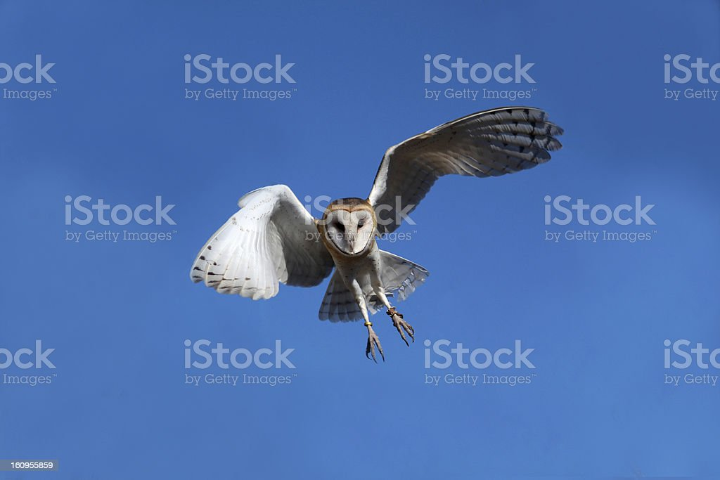 Coming Down royalty-free stock photo