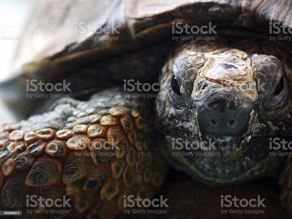 coming from prehistoric ages royalty-free stock photo