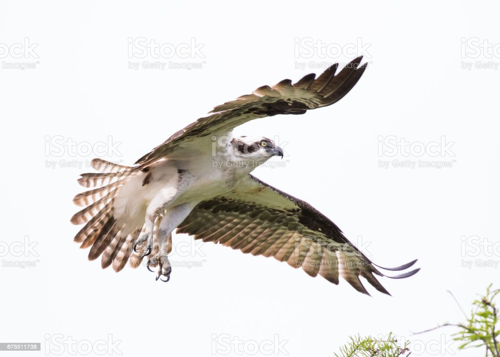 Coming In To Land royalty-free stock photo
