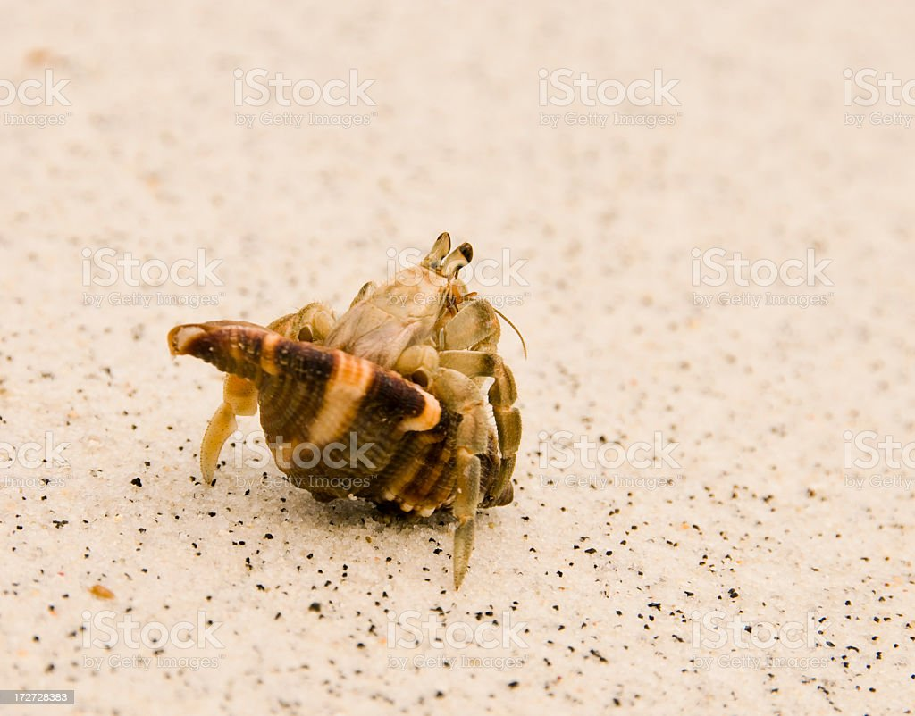Coming Out of the Shell stock photo