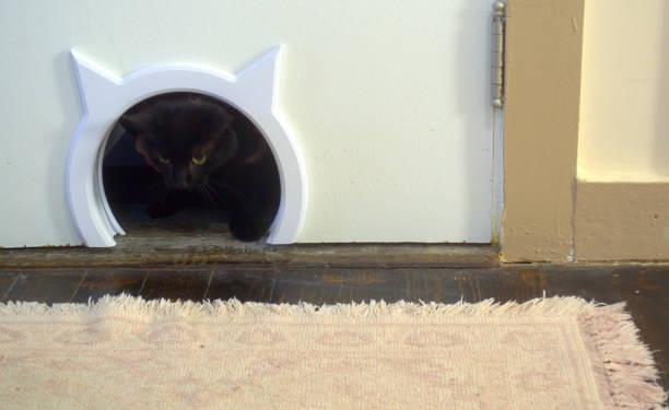 Kommen durch!  Schwarze Katze Spaziergänge durch Cat-Tür – Foto