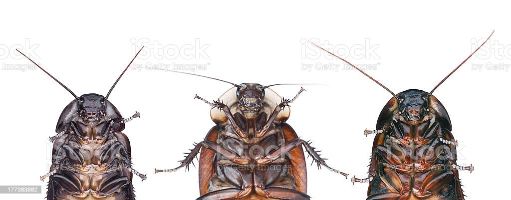 Commando Pest stock photo