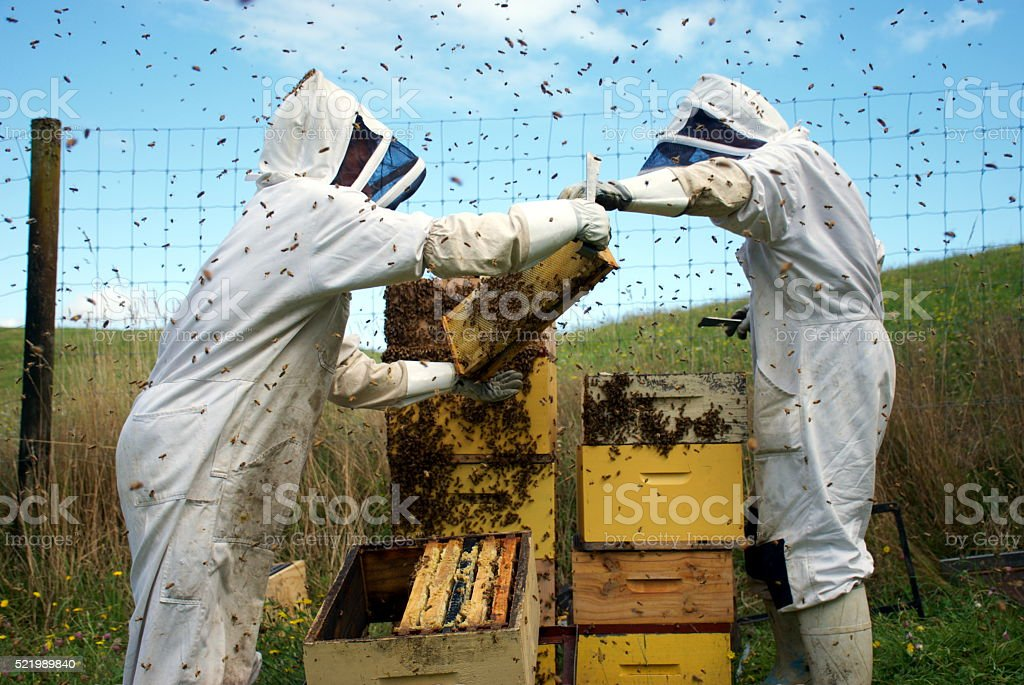 Commercial Beekeepers with Beehives stock photo