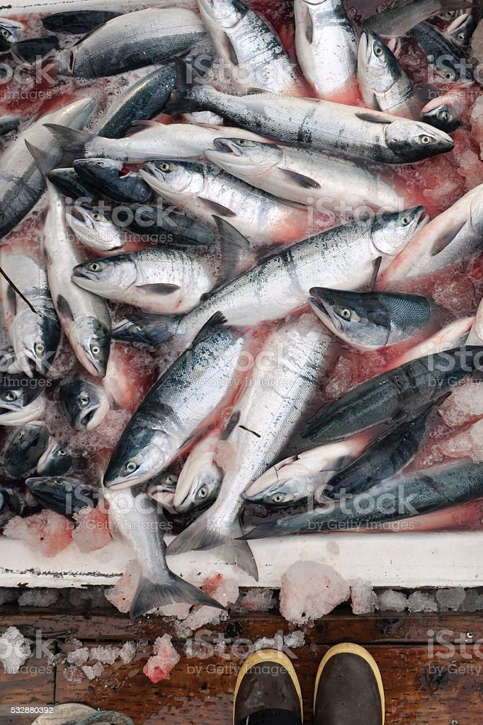 Commercial Fishing in Alaska stock photo