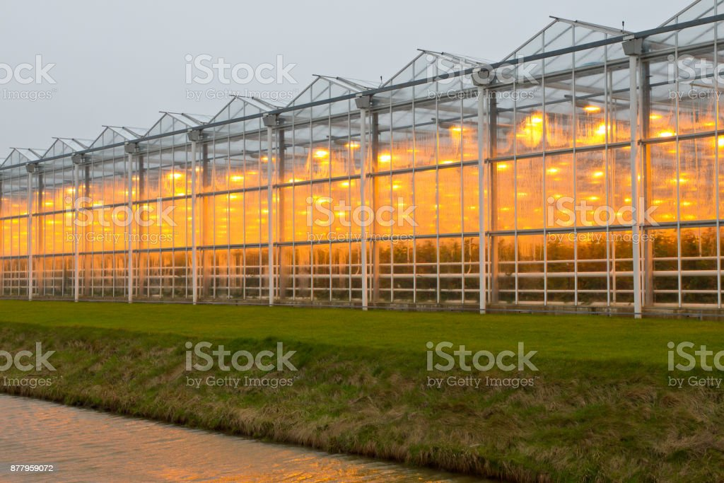 commercial greenhouse stock photo
