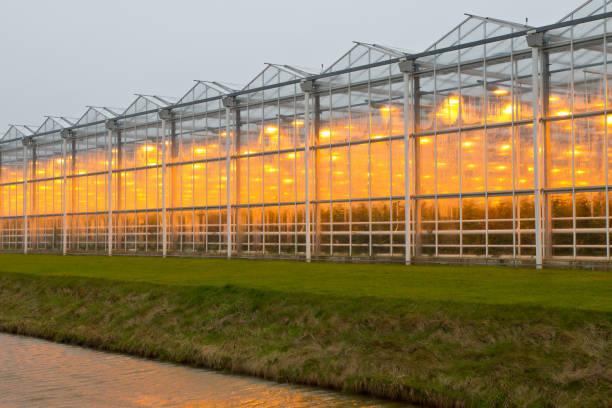 commercial greenhouse - теплица стоковые фото и изображения