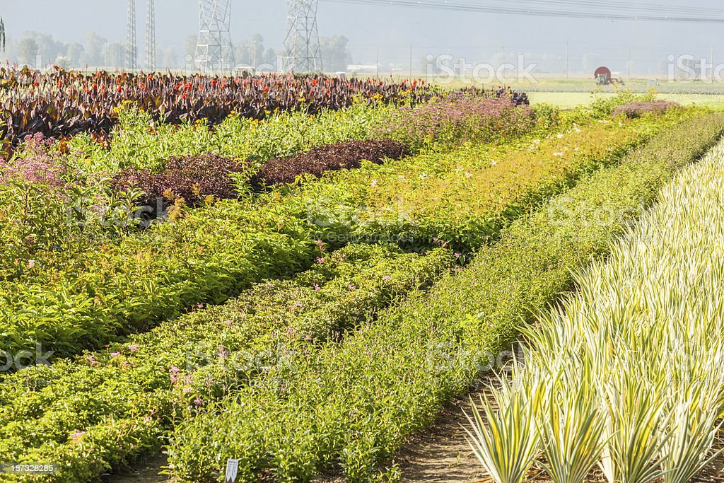 Commercial Nursery royalty-free stock photo