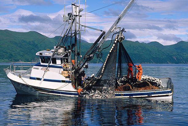 Commercial Salmon fishing  fisherman stock pictures, royalty-free photos & images