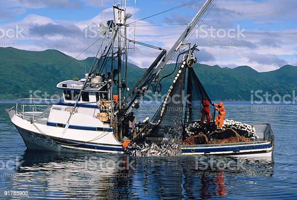 Commercial Salmon Fishing Stock Photo - Download Image Now