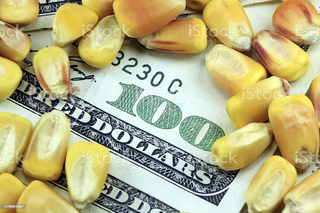 Commodity trading concept - US currency with yellow corn stock photo