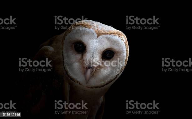 Common barn owl close up picture id513642446?b=1&k=6&m=513642446&s=612x612&h=2lremhqkcck9 ls093jtemepi3ewe7kfpo9j6hctwva=
