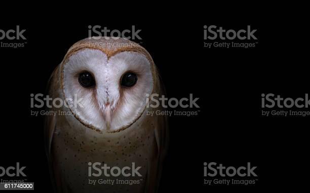 Common barn owl in the dark picture id611745000?b=1&k=6&m=611745000&s=612x612&h=4tjlvuv6v3uoh4fztlqwmrwu9tiwyeg jwhfqovpbie=