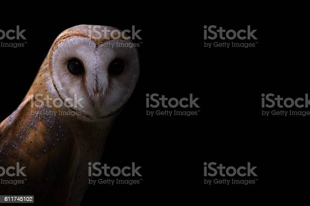 Common barn owl in the dark picture id611745102?b=1&k=6&m=611745102&s=612x612&h=aen  naojwdvurdh6 doawodzqw2itxypwqjf8xrtty=