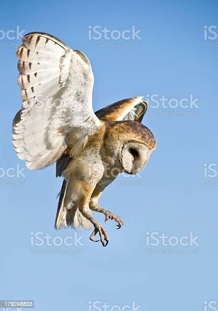 Common barn owl taking flight picture id179248833?b=1&k=6&m=179248833&s=612x612&h=xjwiz 2mr452dyyopsl7nrpb3odokuq3ew72w237nzo=