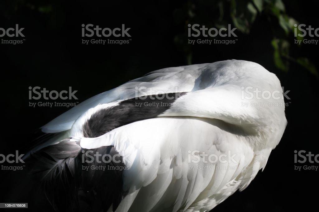 A common crane stock photo
