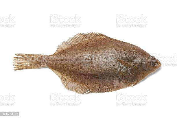 Gemeinsame Anwendung Des Dabfisch Stockfoto und mehr Bilder von Einzelner Gegenstand