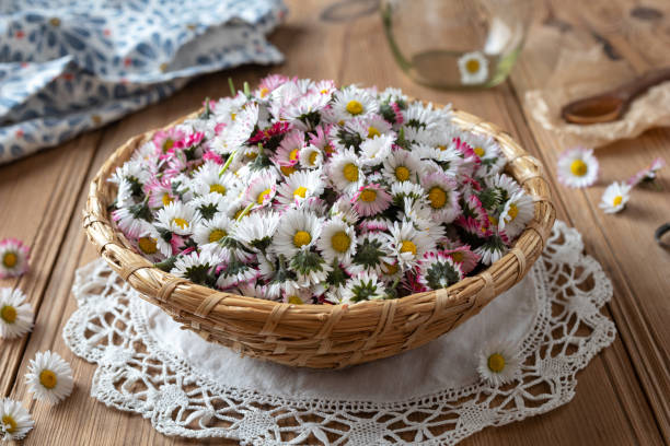 gemeenschappelijke daisy bloemen in een rieten mand - madeliefje stockfoto's en -beelden