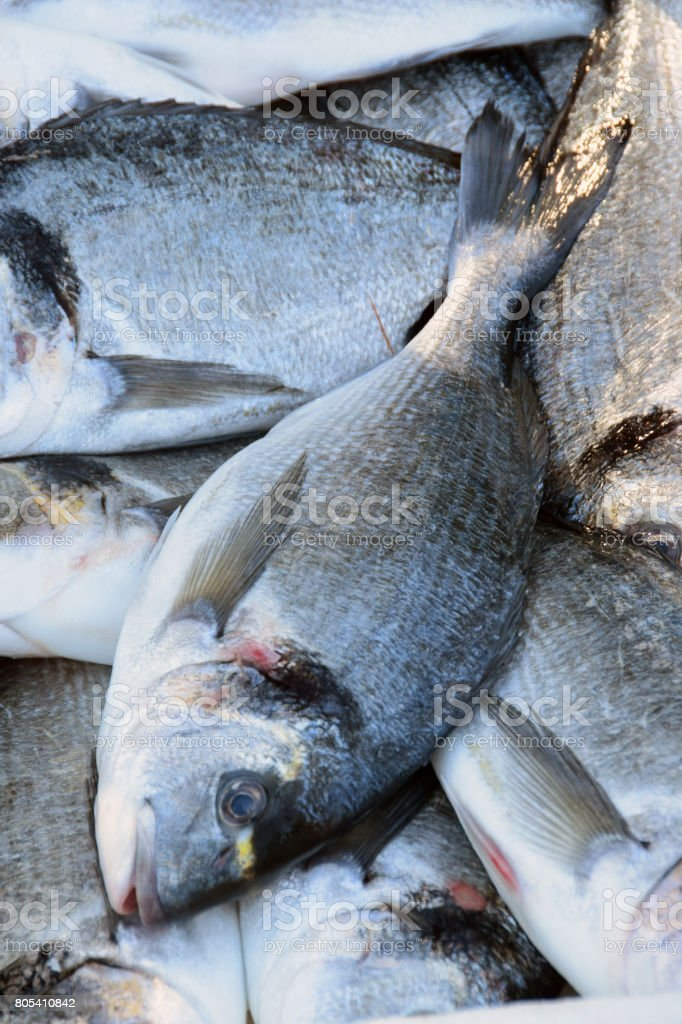Common dentex - a catch of fishermen on a fish market stock photo