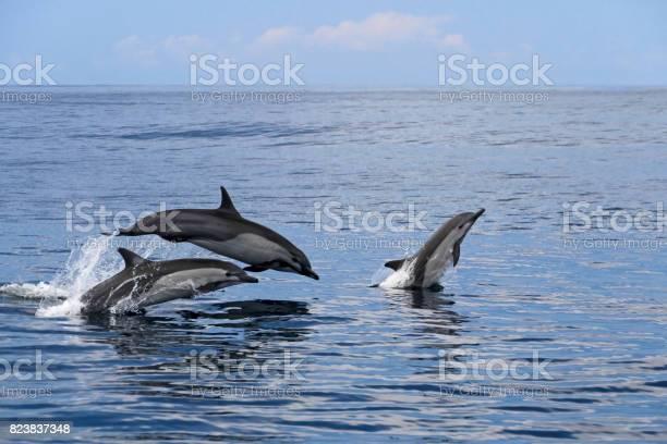 Common dolphins jumping costa rica picture id823837348?b=1&k=6&m=823837348&s=612x612&h=ndedy0qs2sm0oz26yljzva8bumvfm66yj9qgbskumb8=