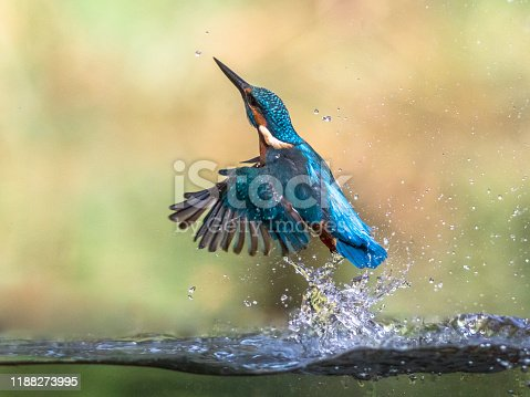 istock Common European Kingfisher emerging abstract 1188273995