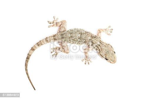 Fotografía de Gecko Común y más banco de imágenes de Actividad | iStock