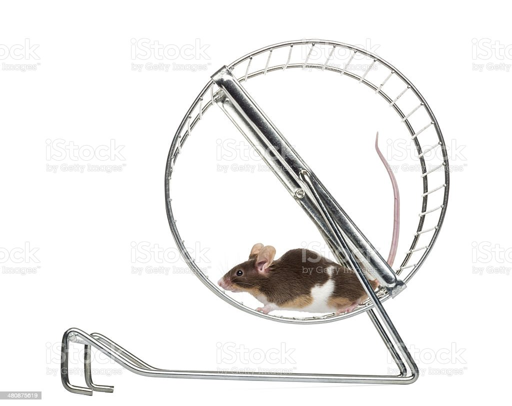 نتيجة بحث الصور عن mice wheel