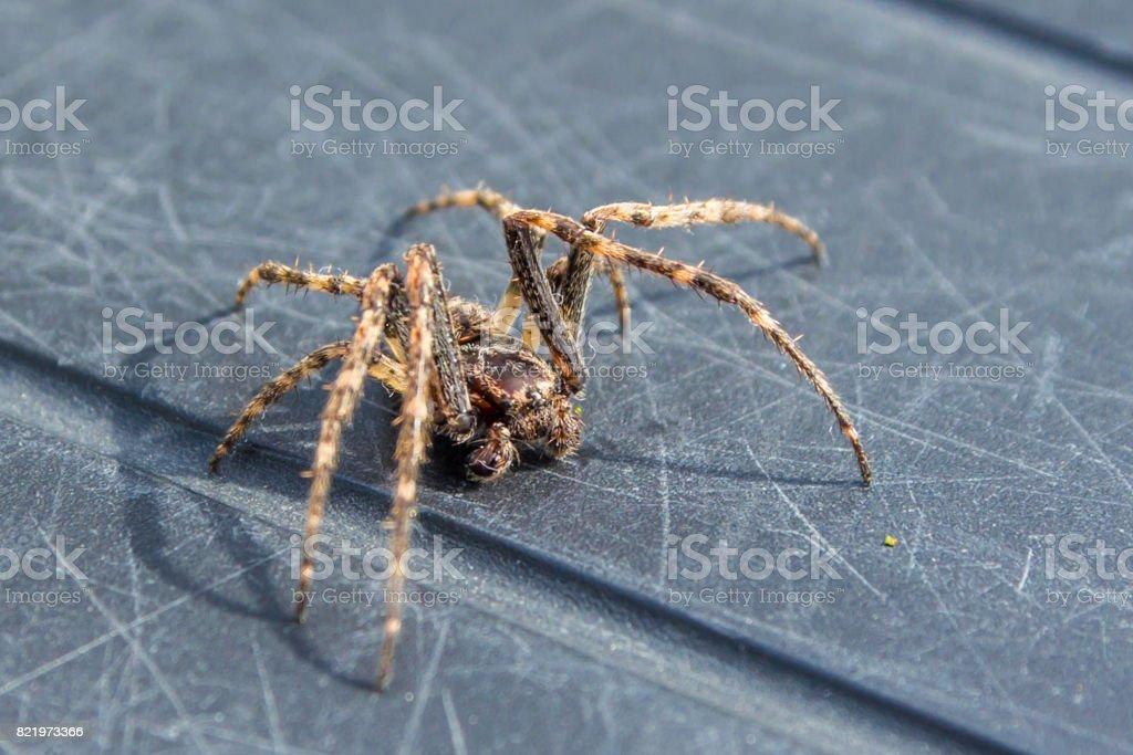 common house spider stock photo