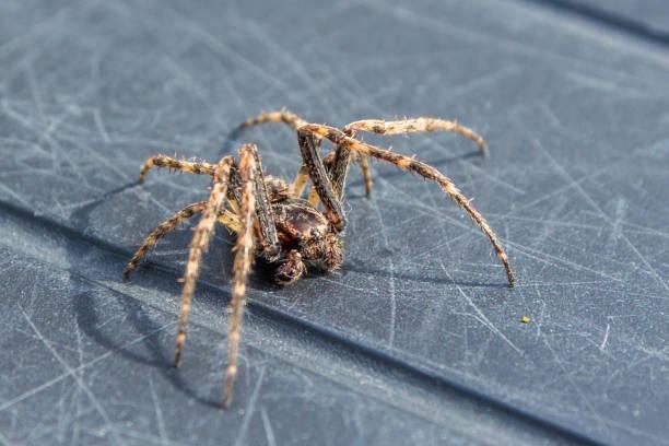 common house spider - going inside eye imagens e fotografias de stock
