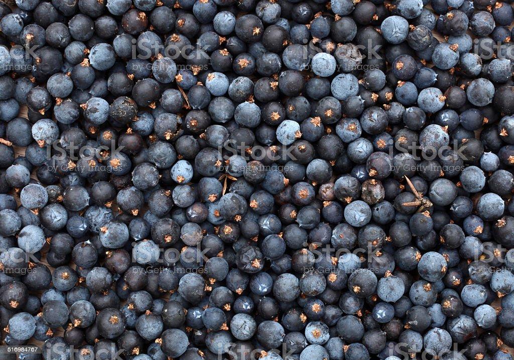 Juniperus communis comum de frutas silvestres - foto de acervo
